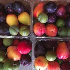 mixed plums.JPG