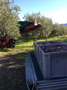 harvest time.jpg (1)