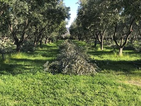 pruning 3.jpg