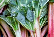 rhubarb-growing-guide.jpg
