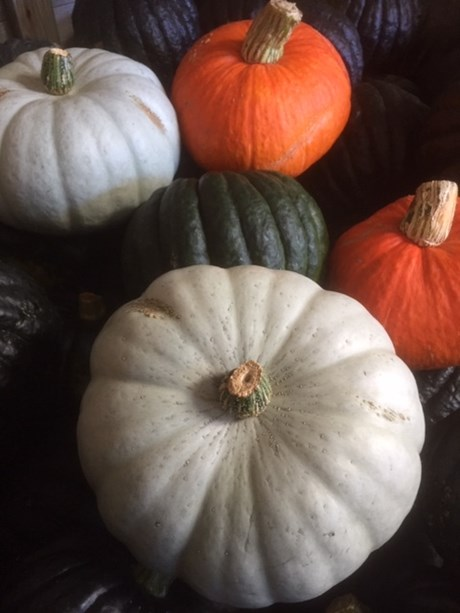 Pumpkin Squash.jpg
