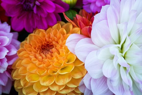 Alyson Willocks Flowers.jpg