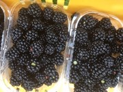 Blackberries 24th Aug.jpg