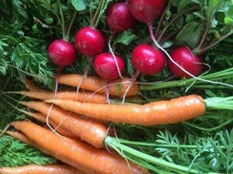 ettricks carrots.jpg