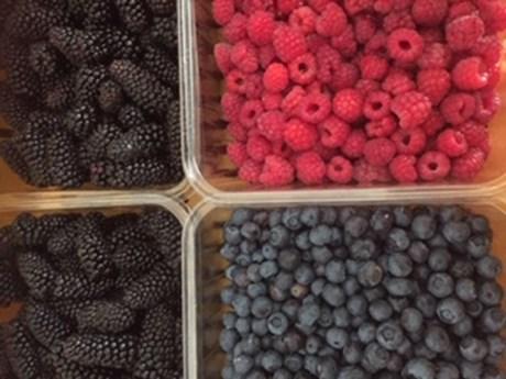 ettrick - berries.jpg