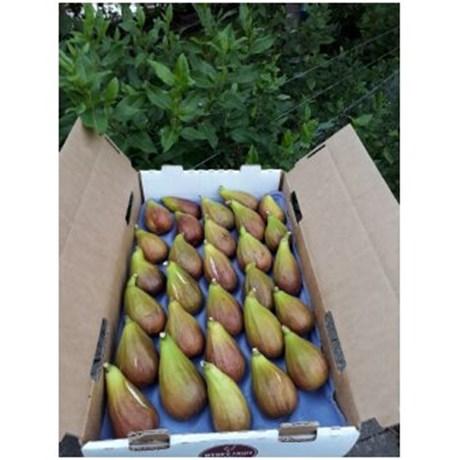 figs pauleys.png