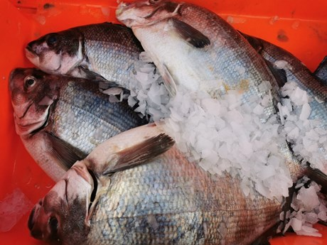 moki harbourfish.jpg