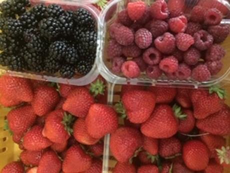 ettricks berries.JPG