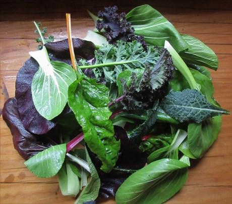 salad mix waewae.jpg
