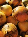 onions caithness.jpg