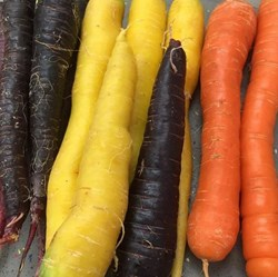 colourful carrots.JPG