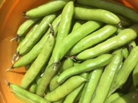 23012021 beans.jpg