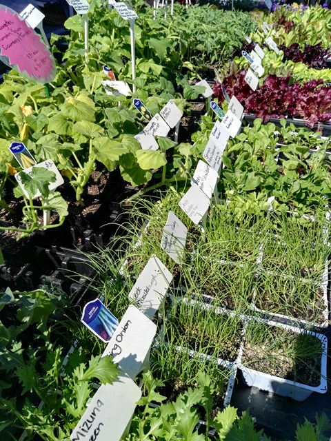 Waikouaiti Gardens return to the Otago Farmers Market this weekend with a great selection of vegetables plants for your spring planting...
